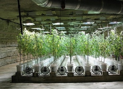 Soil vs Hydroponics All about cannabis
