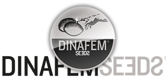 dinafem bank