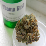 obama-kush-cannabis
