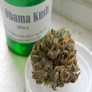 obama-kush-review