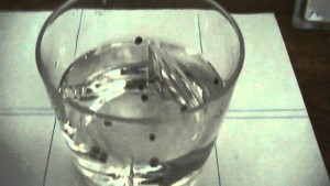 Germination of cannabis seeds in a glass of water