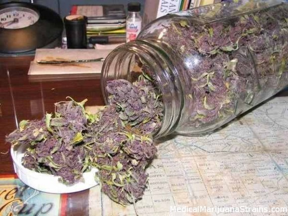 A nice jar of Grand Daddy Purple buds