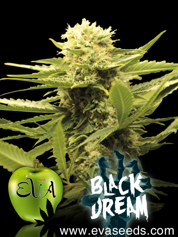 black_dream_eva_seeds