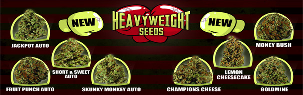 heavyweight-seeds