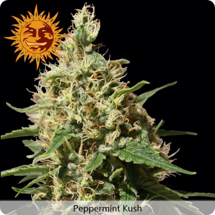 Barneys Farm Peppermint Kush